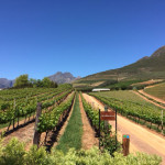 Vineyard Italian Tour